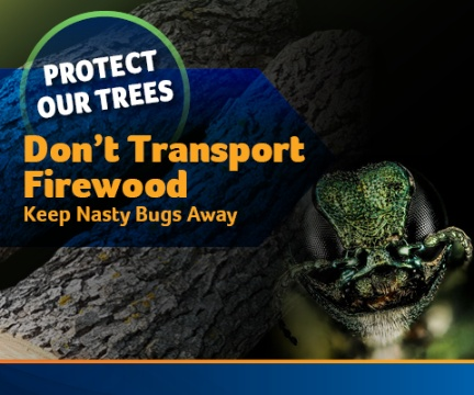 Emerald Ash - Don't Transport Firewood Ad